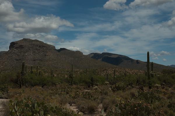 20050429 Sabino Canyon118