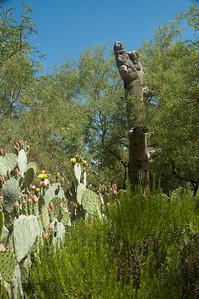 20050429 Sabino Canyon026