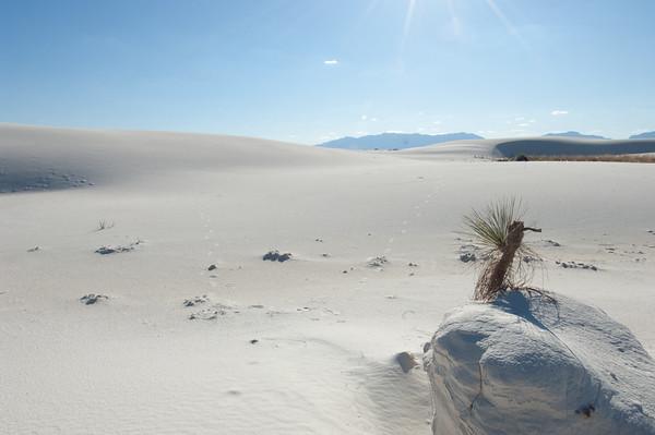 20081007 White Sands 046