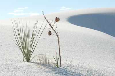 20081007 White Sands 037