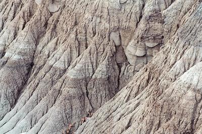 20090531 Arizona Petrified Forest 019