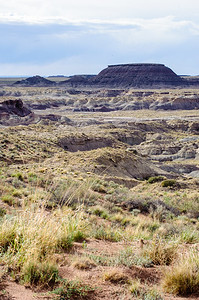20090531 Arizona Petrified Forest 003