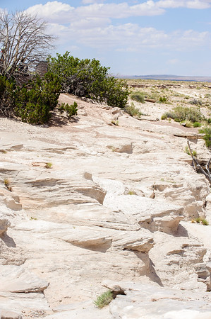 20090621 Petrified Forest044