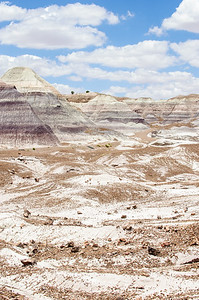 20090621 Petrified Forest036