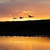 20091212 Bosque del Apache 758