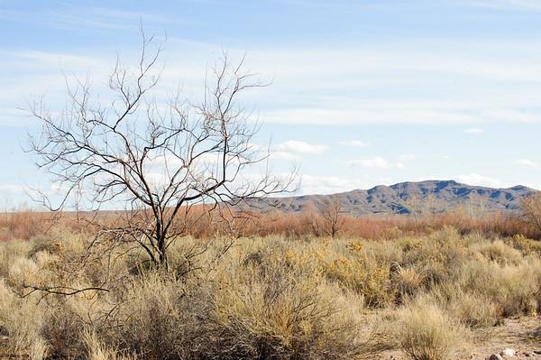 20091212 Bosque del Apache 028