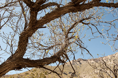 20100404 Guadalupe Mountains 008