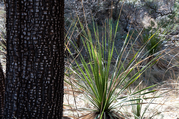 20100404 Guadalupe Mountains 016