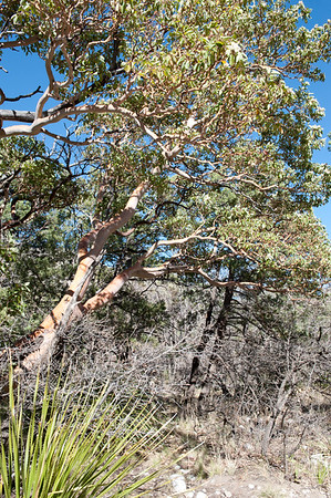 20100404 Guadalupe Mountains 022