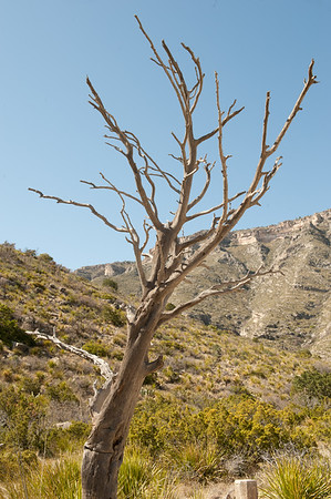 20100404 Guadalupe Mountains 002