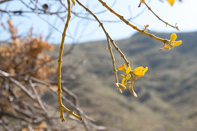 20100404 Guadalupe Mountains 012