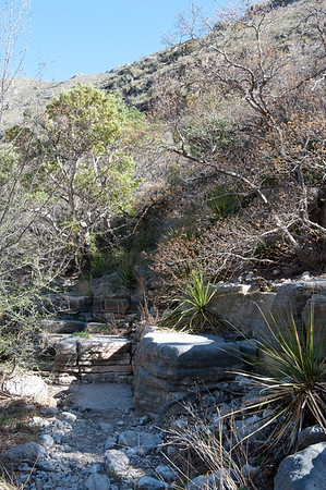 20100404 Guadalupe Mountains 021