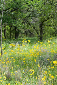 20100406 Enchanted Rock 039