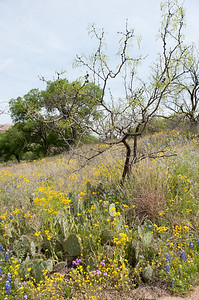 20100406 Enchanted Rock 038