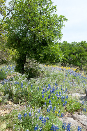 20100406 Enchanted Rock 035