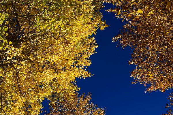 20111015 Taos 045