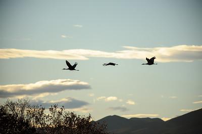 20111124 Bosque del Apache 101