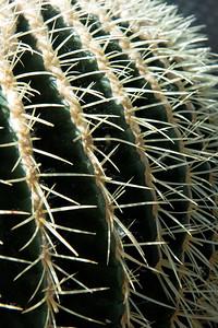 20160805 Albuquerque Botanical Garden 001-e1