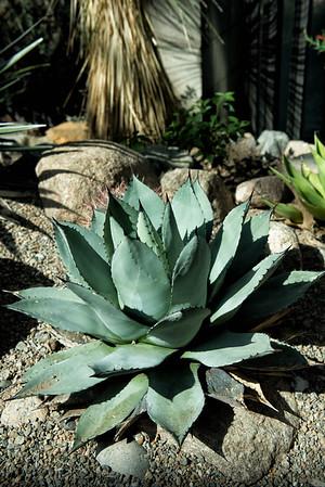 20160805 Albuquerque Botanical Garden 006-e1