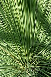 20160805 Albuquerque Botanical Garden 007-e1