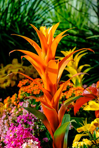 20170309 Abq Botanical Garden 009