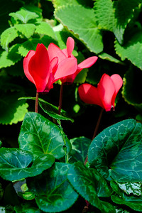 20170309 Abq Botanical Garden 013
