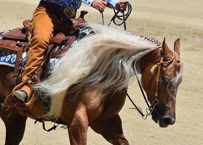 Reining by the Bay 2017