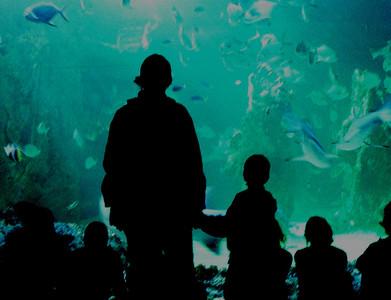 Helga und Oskar im Aquarium in Sydney