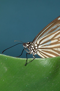 Im Butterflypark