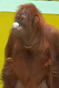 Die Gorillas waren witzig Sie wirken fast wie kleine, verspielte Kinder