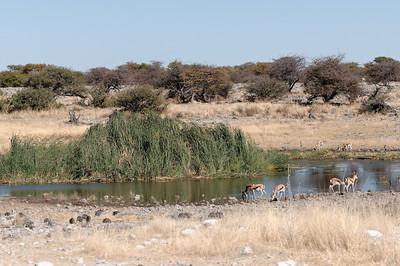 Ein anderes, wunderschönes Wasserloch. Aber immer noch keine Spur von Nashörnern.