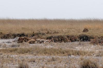 Und noch ein paar Löwen zum Abschied.