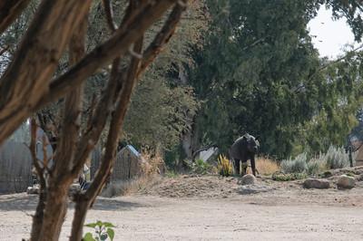 Die Kinder haben das erste Nashorn gesichtet. Leider nur eine Attrappe