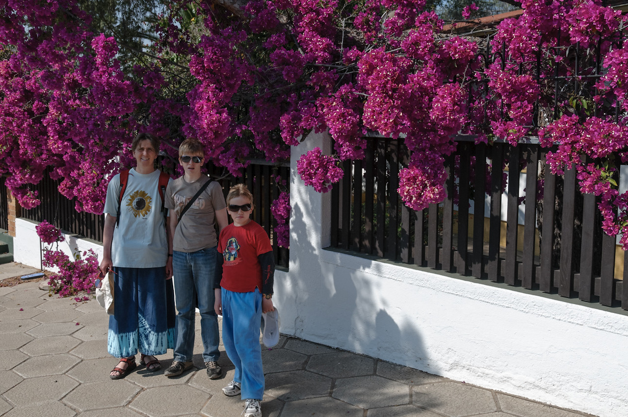 Solche Blumen hatten wir in Brunei auch.
