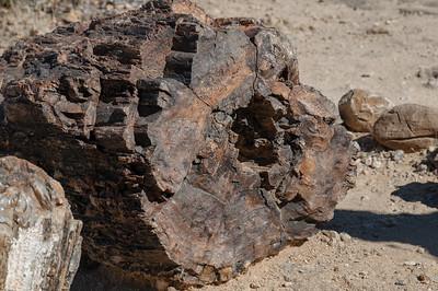 An diesem Stamm konnte man anhand der Jahresringe sehen, dass er etwa 200 Jahre alt geworden ist.