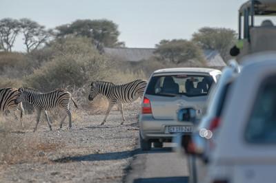 Hier mussten wir ein paar Minuten anhalten. damit eine grosse Zebraherde die Strasse überqueren konnte.