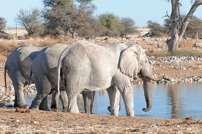 Am Wasserloch direkt an einer Station im Park konnten wir drei Elefanten beobachten.