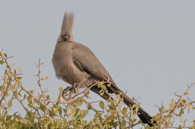 Ein Lärmvogel