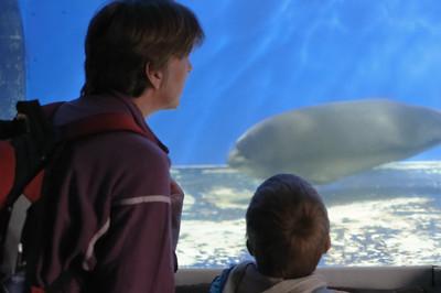 Das Museum hat auch ein kleines Aquarium.