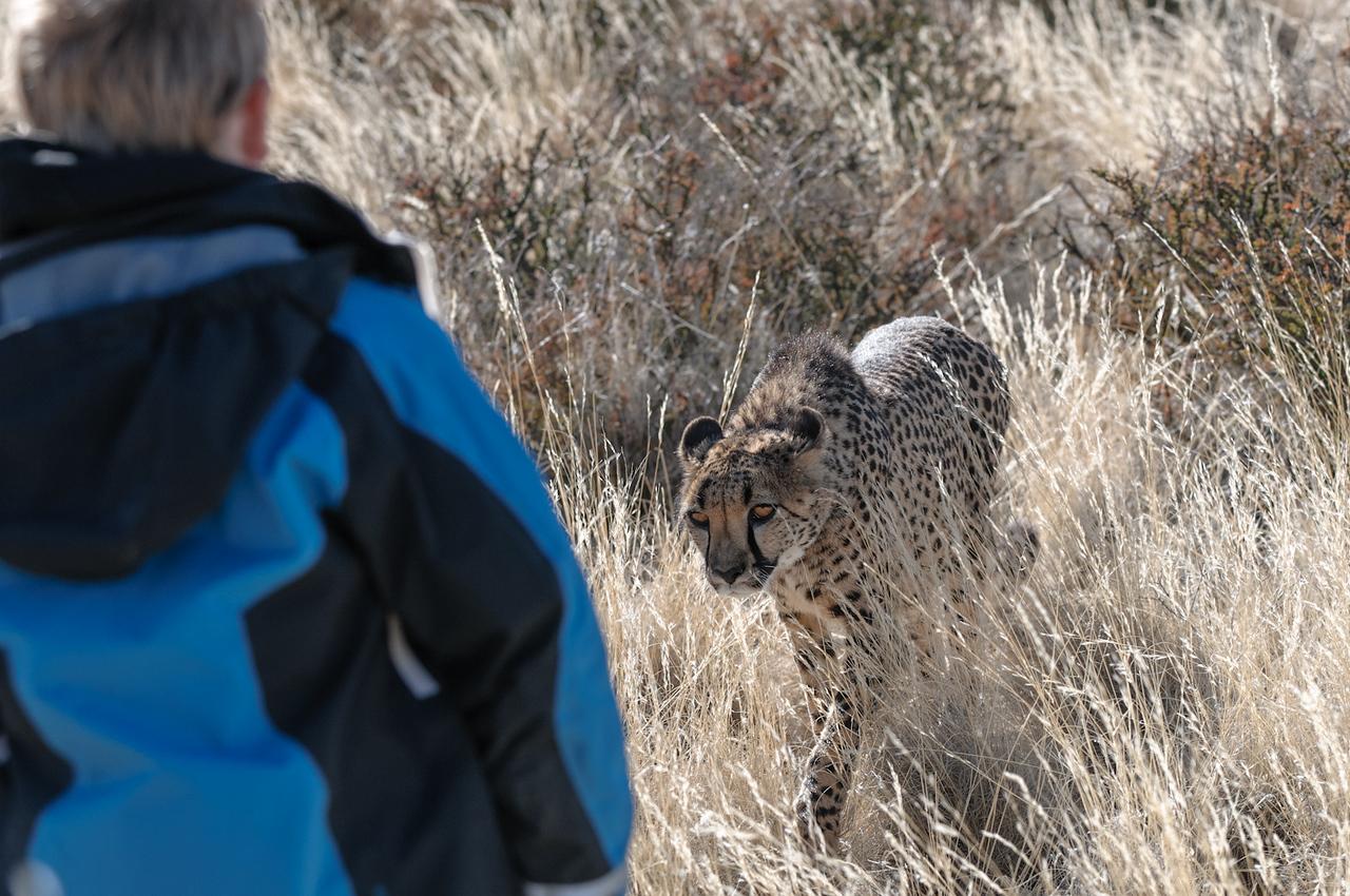 Diesen Geparden durften die Kinder sogar streicheln. Aber vorsicht, nicht weglaufen...