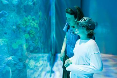 Die Scheibe vor dem grossen Aquarium ist 16x8m gross. Und 60 Centimeter dick.