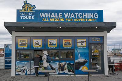 Hier buchen wir eine Bootsfahrt, um Wale zu beobachten.