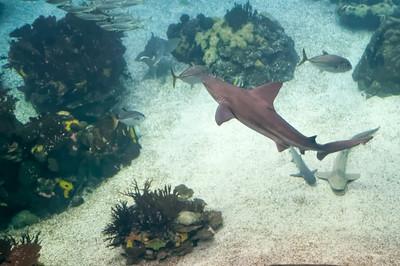 Im grossen Becken gab es natürlich auch Haie.