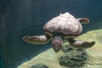 In einer Sonderausstellung gab es Schildkröten zu sehen.