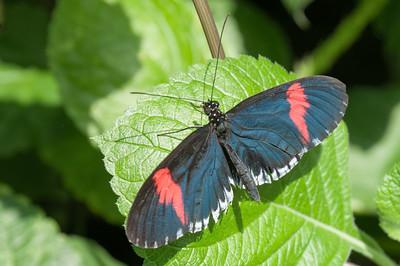 In einer speziellen Abteilung konnte man Schmetterlinge sehen. Es wurde streng darauf geachtet, dass keiner aus dem Raum entkam.