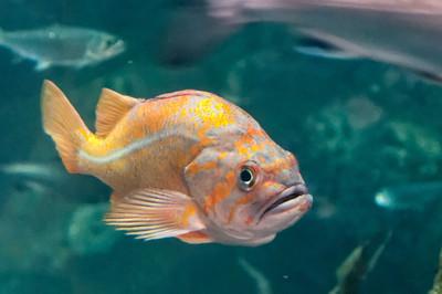"""Am Ende des tages """"mussten"""" wir noch in das Aquarium."""
