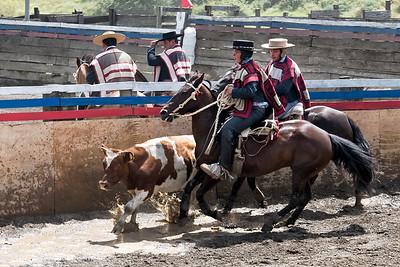 Auf dem Volksfest gab es auch ein Rodeo.