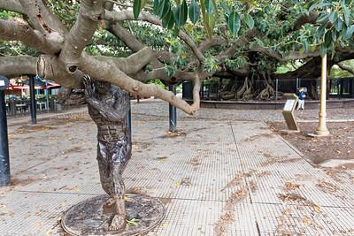 Ein gewaltiger Baum im Stadtteil Recoletta.