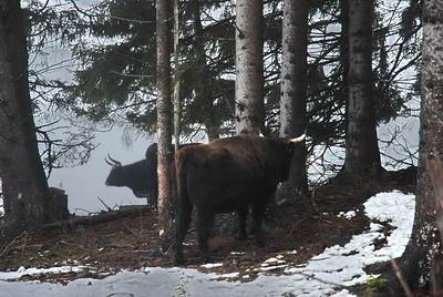 Bayerisch Eisenstein 39 Tierfreigehege Ludwigstal