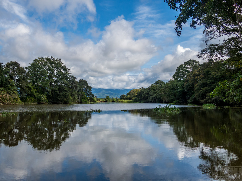 Rio Sierpe, Mangroventour